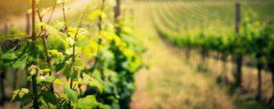 les vin du Luberon